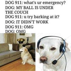 dog$it