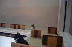 One Walnut and Red Oak Cat Shelf Cat Perch by KittyOverlords, $49.00
