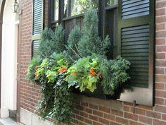 File:2011 windowbox BeaconHill BostonMA September IMG 3737.jpg - Wikimedia Commons