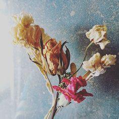 友人にもらった花 ドライフラワーにしました