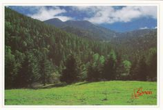Pangquangou in Shanxi,China Postcard,Forest,Mountain