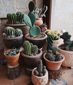 Shop online for all your Cactus and Succulent must haves. Our selection of decorative planters will help you add plenty of personality to your space. Cactus House Plants, House Plants Decor, Plant Decor, Cactus Planters, Cacti And Succulents, Planting Succulents, Planting Flowers, Plant Aesthetic, Flower Aesthetic