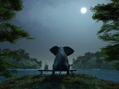 Elephant and Dog Meditate at Summer Night Photographic Print by Mike_Kiev at Art.com