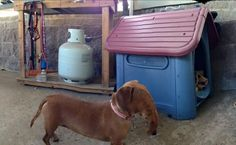 Friend Tried To Take A Panorama Of Her Dachshund