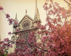 Notre Dame clothed in cherry blossoms