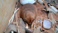 Overweight Stray Dog Makes A Stunning Transformation