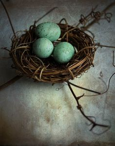 nest robins eggs still life photography 8x10 by BloomWithAView