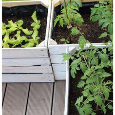 alte Obstkisten Hochbeet Gemüse im Garten für Kinder