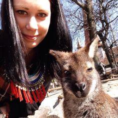 Kangoroo,