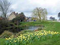 Spring in Sarratt, Hertfordshire, England.  We have friends that live in Sarratt, it's a beautiful place.