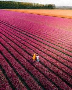 Nature Beauty Tulip fields in Netherlands Couple Must Go There Champs, Tulip Season, Secret Location, Tulip Fields, Photo Couple, Seen, Travel Videos, Travel And Leisure, Travel Couple