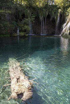 croatia plitvice tree in lake