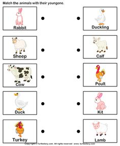 Worksheets Animals And Their Young Ones Worksheet images of names animal parents and their babies match farm animals to worksheet 1