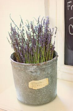 Lavendar in a sweet little bucket