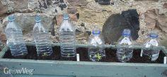 Plastic bottle cloches