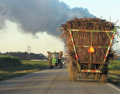 (FALL) Southwest Louisiana Sugar Cane Harvest time Image at ...  Do they still burn off the fields?