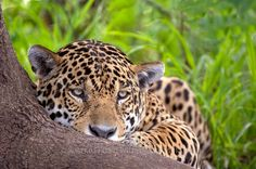 Roberto Fabbri Wildlife Photography
