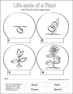 seed seed leaves sprout seedling plant glue circles onto colored paper then cut around outside. Black Bedroom Furniture Sets. Home Design Ideas