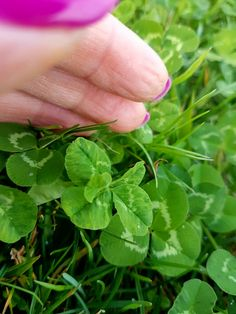 Find 5 leaf clover down the road near by