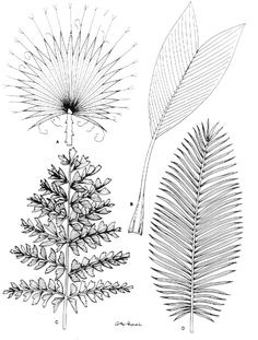 Leaf, palm, illustration