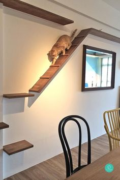 5 Cat-Friendly Playgrounds At Home (pictured) a built-in cat walkway idea Cat Playground, Playground Design, Cat Walkway, Cat Climbing Wall, Cat Climbing Shelves, Cat House Diy, Gato Gif, Cat Shelves, Cat Room