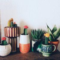 かわいいお花を咲かせましょう♪ 色で楽しむサボテンの育て方・飾り方*
