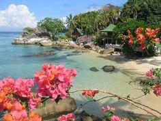 Tioman Island Minang Cove Resort in Malaysia, Asia Kuala Lumpur, Pulau Tioman, Redang Island, Koh Rong Samloem, Tioman Island, Asia Cruise, Destinations, Malaysia Travel, Exotic Beaches
