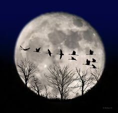 I combined a capture of the Supermoon of Nov. 15th 2016 with some Photoshop brushes of trees and flying geese in this digital composition.  I purposely blurred the moon and to a lesser degree, the trees and geese.  I added a tint of orange to the moon and purple to the upper sky area.