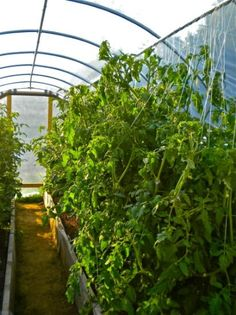 How-To Build a Hoop House; a collection of resources for growers.