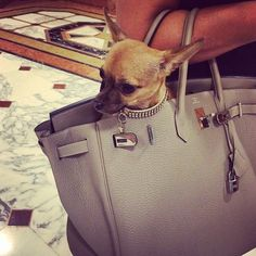 "#Casino ""My baby #chanel "" #me #mum #mommy #dog #chihuahua #puppy #hermes #hermesbirkin #birkin #birkinbag #collar #swarovski #forpetsonly #luxury #luxurylife #lifestyle #brand #fashion #glamour #vogue #limitededition #monaco #montecarlo #metropole #shopping #classy #elegance #elegant #millionaire by izgoldspikes from #Montecarlo #Monaco"