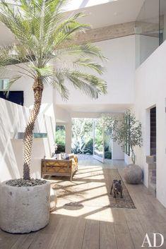 indoor palm tree concrete planterDecorating w\/ plants