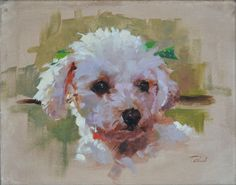 """Bernie's Poodle, oil on canvas, 16""""x12""""  I created a pair of portraits for Bernie, the owner of City Dogs in San Francisco. I can't say enough great things about Bernie and City Dogs. If you're in the San Francisco area, stop by and check out the paintings while your dog gets the spa treatment. #petportrait #dogpainting #petpainting #dogportrait"""