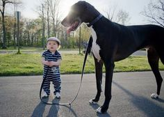 Tall dog with a child...