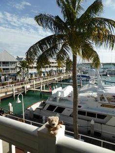 Fozzie in Key West