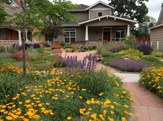 This gorgeous drought-tolerant front lawn was created from scratch by customer Mary R. of Fort Collins, Colorado. Read her how-to suggestions to create a colorful, water-thrifty garden buzzing with bees, butterflies and hummingbirds.
