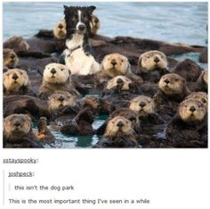 funny animal tumblr posts 3.jpg