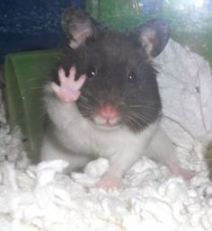 "He sez, ""Take 5 to end cosmetics testing on animals"" http://www.crueltyfreeinternational.org/en/around-the-world/usa/take5"