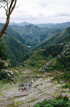 The Batad rice terraces belong to the UNESCO World Heritage Site 'Rice Terraces of the Philippine Cordilleras'. This site is located in the Philippines. Rice Terraces, Cheap Web Hosting, Philippines, Travel, Viajes, Destinations, Traveling, Trips