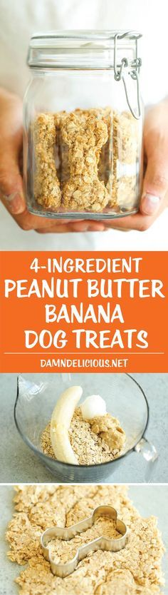 Peanut Butter Banana Dog Treats - All you need is 4 ingredients for these hypoallergenic treats! And the coconut oil makes these so HEALTHY for your pup! ~ Damn Delicious (no cookie coconut oil) Puppy Treats, Diy Dog Treats, Dog Treat Recipes, Healthy Dog Treats, Dog Food Recipes, Horse Treats, Food Tips, Soft Dog Treats, Dinner Recipes