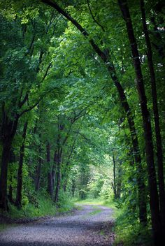 ✯ A picturesque, tree-covered lane in the country.  Three Creeks Conservation Area - Ashland, Missouri