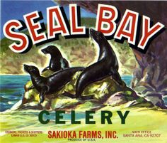 Seal Bay Celery, Santa Ana California vintage vegetable crate art