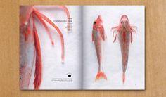 Seafoodpedia by Dan Alexander & Co , via Behance