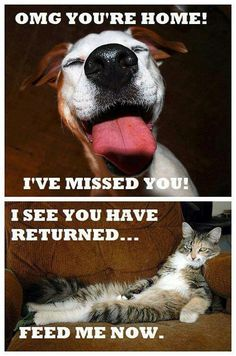 OMG you're Home !