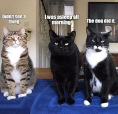 LOL cats! (@LOL_cats)   Twitter