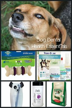 Must-Have Products for Your Dog's Dental Health: We're sharing some products to make at-home dog's dental health care a bit easier! Everything from toothbrushes to toys to keep Spot's smile in shape!