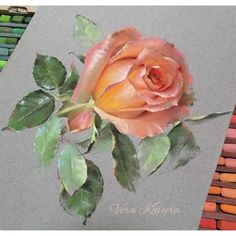 Soft Pastel Art, Pastel Drawing, Painting & Drawing, Watercolor Paintings, Rose Art, Watercolor Rose, Pattern Art, Art Blog, Art Lessons