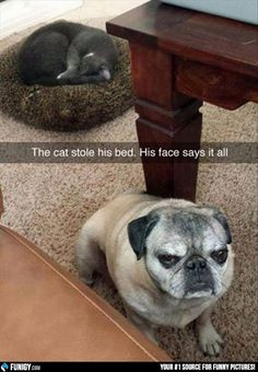 The cat stole his bad. His face says it all. (Funny Animal Pictures) - #bed #cat #dog #face