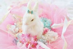 Easter Bunny Is Coming To Town! » My blog