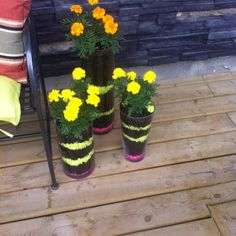 Marigolds in glass vases. Did spikes last year.