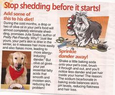 tricks stop tips how sheds shedding a prevent to hair dog and